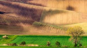 Zvlněná pole